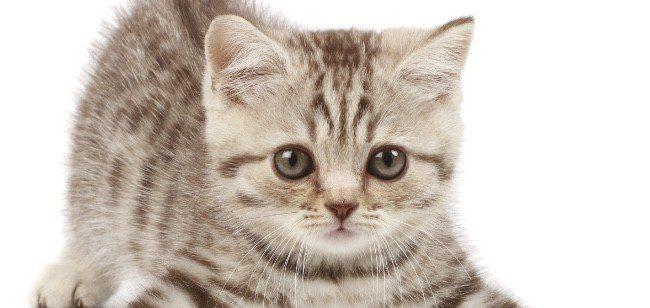 La alergia a los gatos es una de las más frecuentes