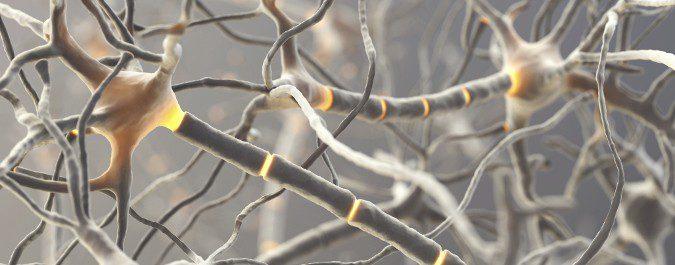 La ELA afecta a las células nerviosas motoras