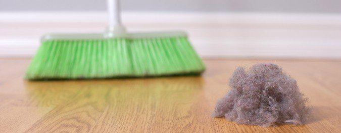 Cada gramo de polvo contiene cientos de ácaros