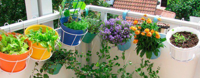 Las plantas tendrán que mantenerse en el exterior