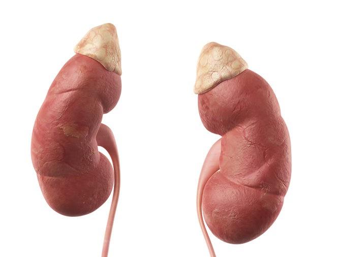 Los órganos que más se trasplantan son riñón, hígado y corazón