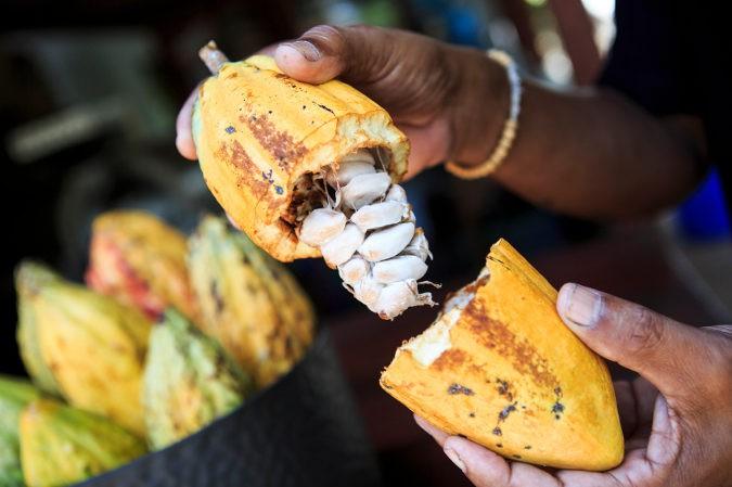 El cacao aumenta el nivel de endorfinas en el cuerpo, lo que nos hace sentir más contentos y activos