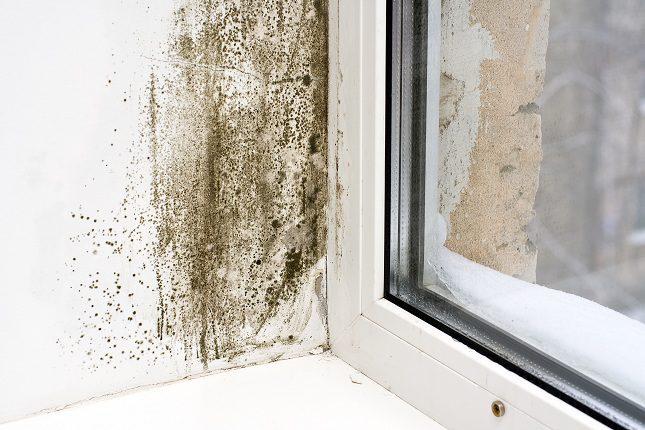 El moho es un organismo que crece y se nutre del ambiente mojado