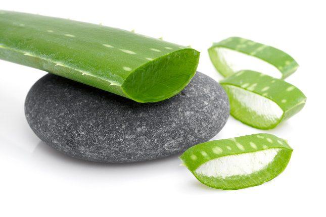 El aloe vera también ayudará a reducir el tejido adiposo
