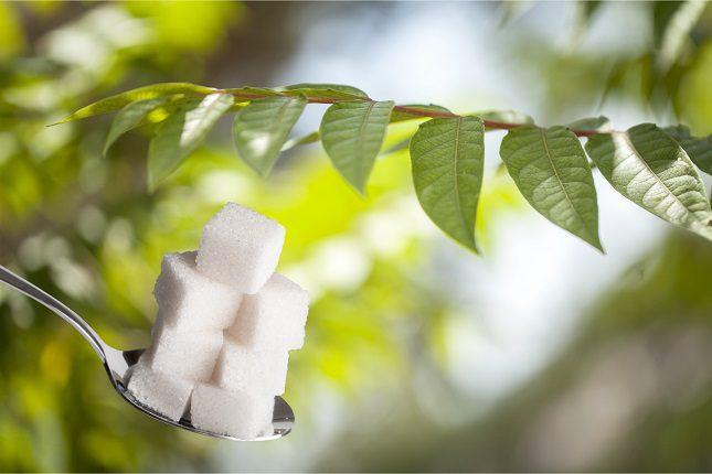 La stevia podemos encontrarlas en galletas, tés e incluso en terrones