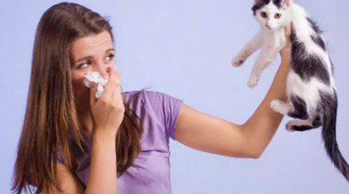 Alergia a las mascotas, ¿qué podemos hacer?