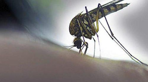 6 cosas que no son verdad sobre el virus del Zika