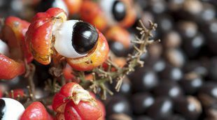 Beneficios del guaraná para tu salud