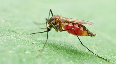 6 cosas que no sabías sobre la malaria