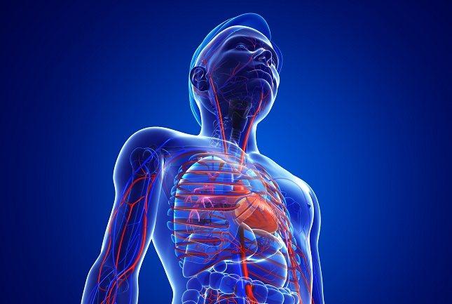 La enfermedad coronaria a largo plazo puede provocar un ataque cardíaco