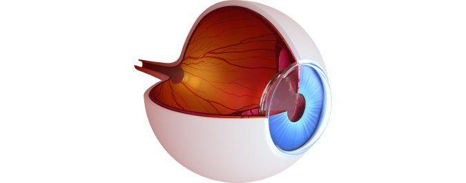 En el glaucoma, la presión provocada por el mal drenaje del fluido ocular daña las fibras del nervio óptico