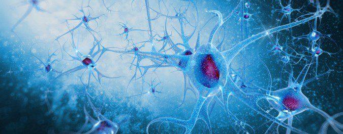 La enfermedad de Alzheimer es neurodegenerativa, en la que vamos perdiendo masa cerebral