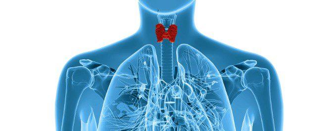 El tiroides es una hormona que se encuentra a la altura del cuello