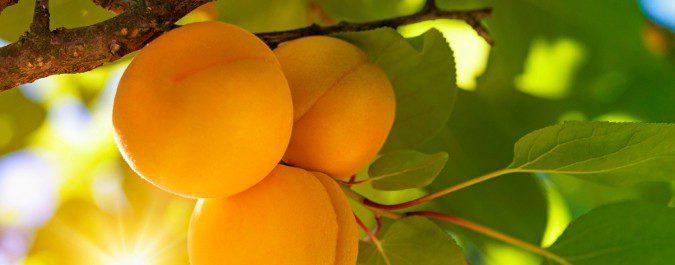El plátano es conocido por su aporte en potasio, pero frutas como el albaricoque contienen más