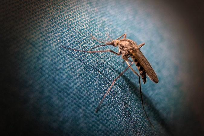 No hay pruebas de que la tiamina sira para repeler al mosquito aedes aegypti