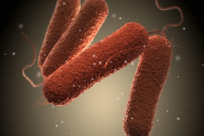 Bacteria salmonella