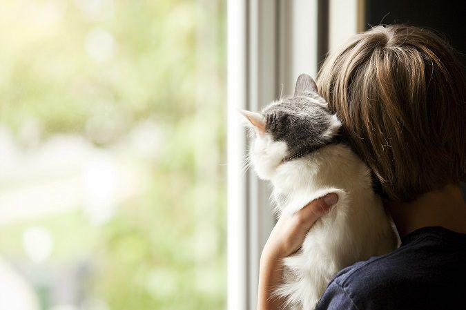 Un gato es tu mejor compañía