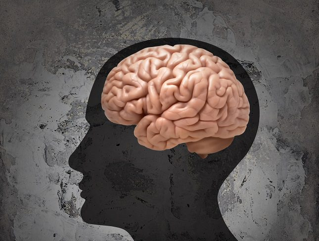 Morfológicamente el cerebro de los hombres y de las mujeres es exactamente igual