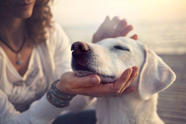 Que un perro tenga la gripe canina nada tiene que ver con el tiempo