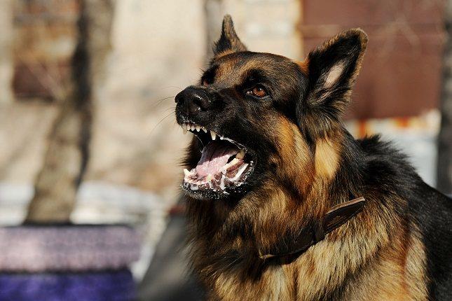 La rabia canina se propaga mediante la saliva cuando esta penetra en el cuerpo de un ser humano sano