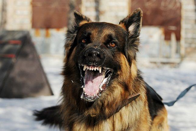 No existe un tratamiento para la rabia canina