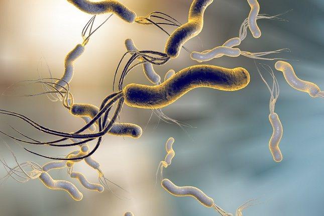 Los estudios de investigación han demostrado que la mayoría de las úlceras son causadas por una infección llamada Helicobacter pylori