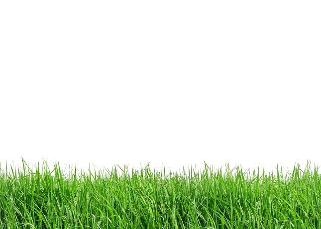 El color verde es natural gracias al color característico de la naturaleza