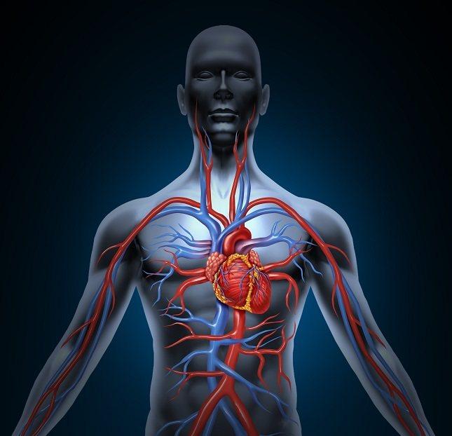 La arteria pulmonar es una de las pocas arterias que transporta la sangre baja en oxígeno