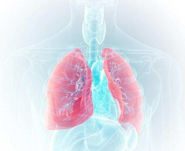 Los bronquiolos se dividen en tres tipos