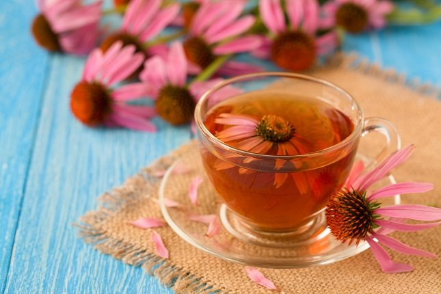 Echinacea es una planta perenne cultivada comúnmente en América del Norte y Europa