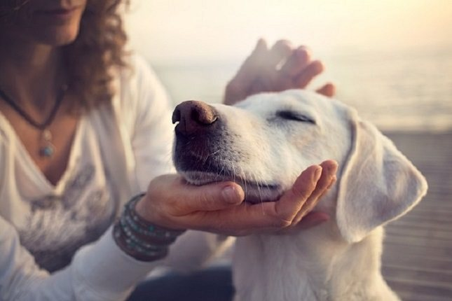Existen varios virus que pueden causar enfermedades respiratorias superiores en gatos y perros