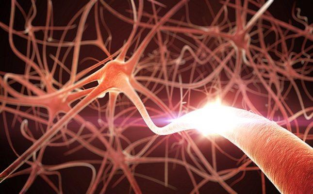 Los neurotransmisores son una parte esencial del funcionamiento diario de cualquier organismo