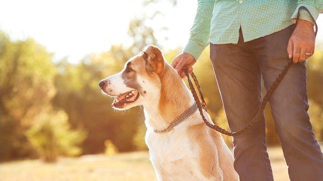 Si tienes perro como mascota sabrás que es un excelente compañero para salir a caminar