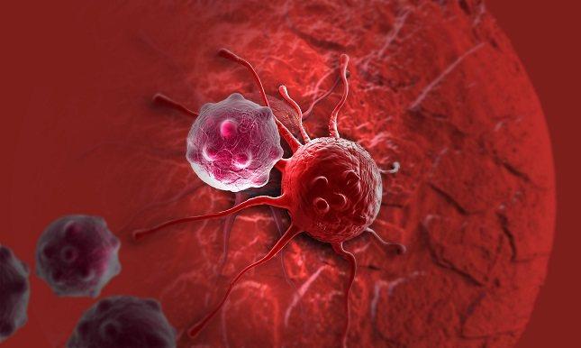 Las células normales dejan de crecer (reproducirse) cuando hay suficientes células presentes