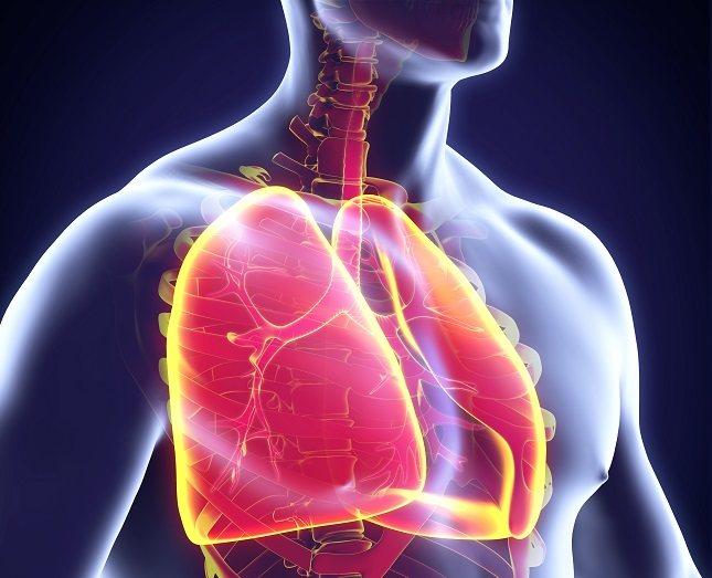 Las glándulas en los bronquios secretan mucosa