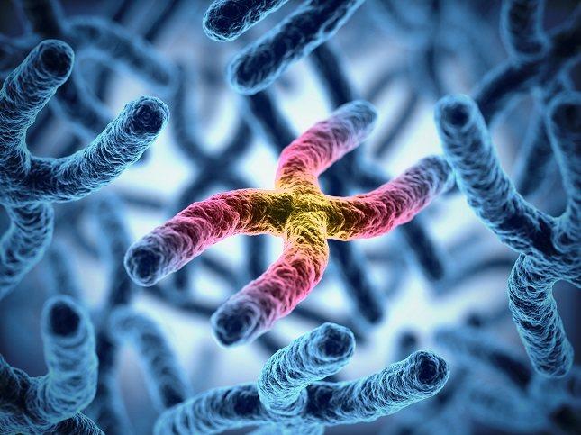 El cromosoma X es significativamente más largo que el cromosoma Y