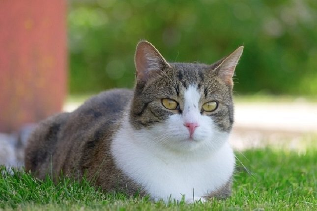 Tener alergia a los gatos es bastante común
