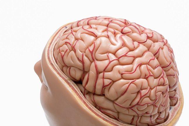 El cerebelo se encuentra en la fosa posterior