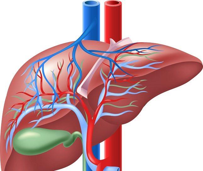 El páncreas se sienta detrás del estómago