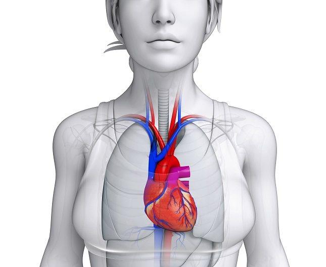 La ateroesclerosis es un problema que afecta a las arterias