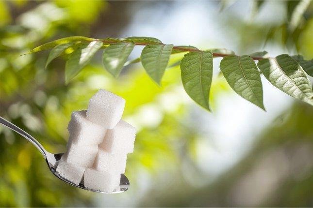 La stevia es una planta que tiene un poder edulcorante mucho mayor que el azúcar