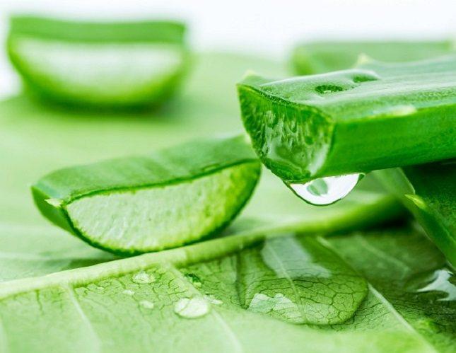 El aloe vera es una planta espinosa con hojas rellenas de gel que consisten en 99% de agua