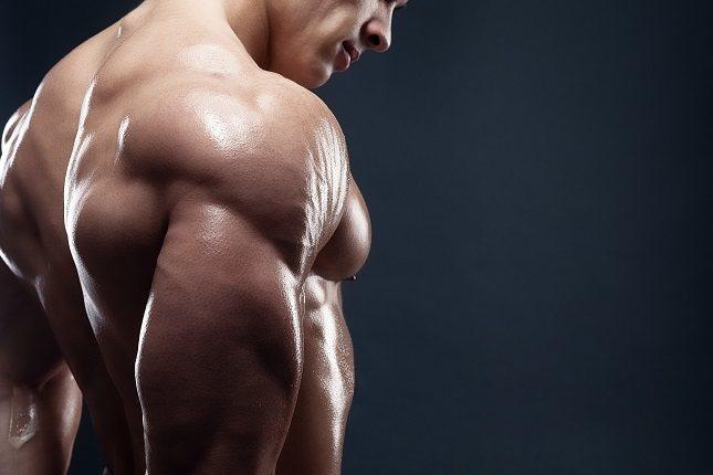 La síntesis de proteínas musculares dura al menos 24 horas a 48 horas
