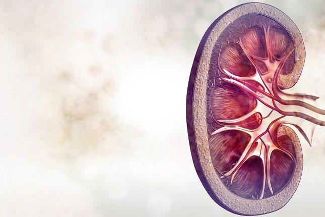 Las células mesangiales forman el mesangio