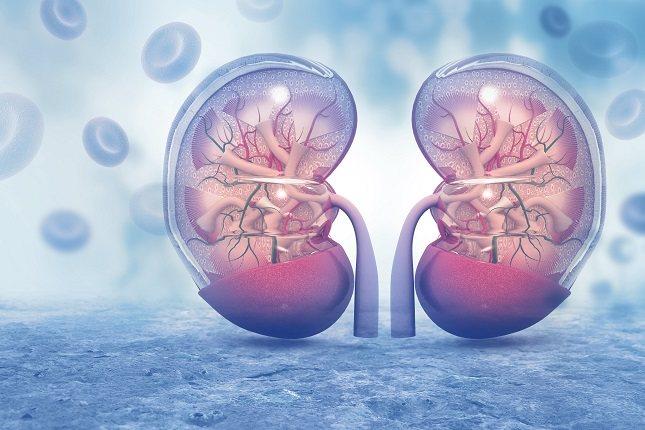 Tus riñones filtran todo el líquido en el cuerpo