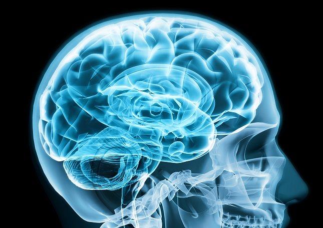 Todos tenemos cerebro, es nuestro centro de operaciones