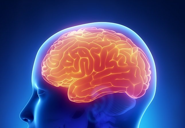 El tronco encefálico incluye el mesencéfalo, la protuberancia y el bulbo raquídeo