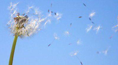 Alergia al polen, ¿qué es y por qué nos ataca?