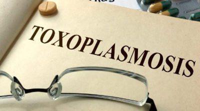 ¿Qué es la toxoplasmosis?