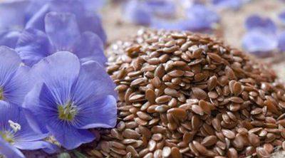 Qué beneficios tienen las semillas de lino para la salud